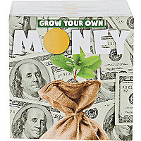 Grow your own money kit