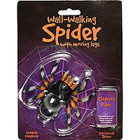 Black Walking Wall Spider