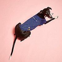 RI Dog – Gestreiftes T-Shirt in Blau