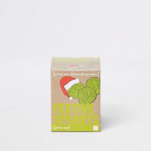 Ecru set kweek je eigen feestelijke spruitjes
