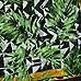Groene lange sjaal met geometrische en palmboomprint