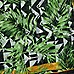 Green geo palm long scarf