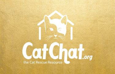 #RIGIVEACATAHOME This Christmas