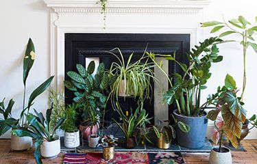 6 Planters Your Home Needs